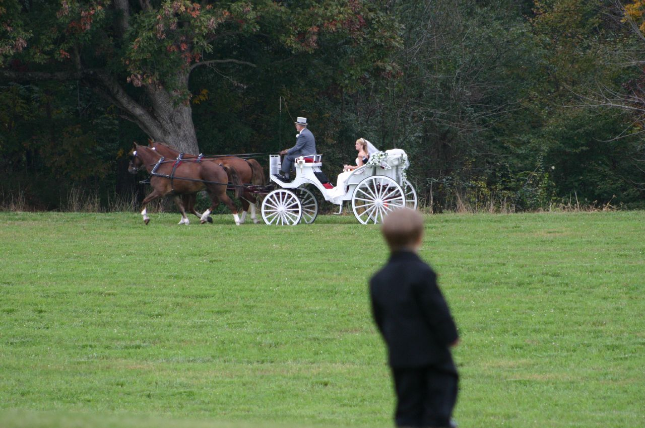 Wedding Day Transportation - Horse and Carriage