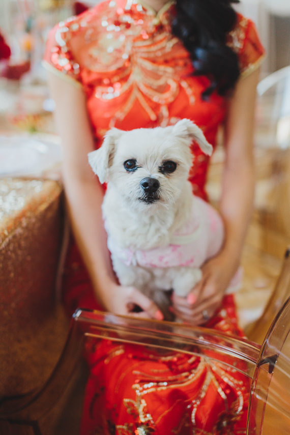 Chic Gold and Red Chinese New Year Dinner Party with a dog. See more at Rebecca Chan Weddings and Events http://www.rebeccachan.ca