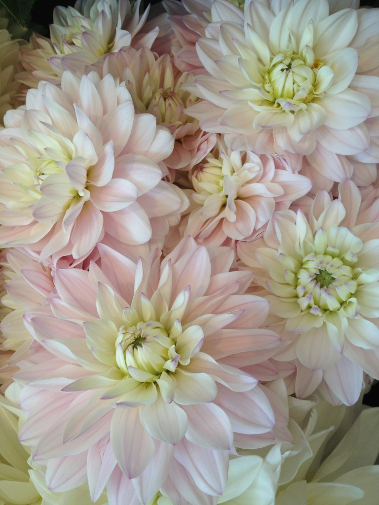 Flowers that look like peonies awesome peony silk flower for Flowers that look like dahlias