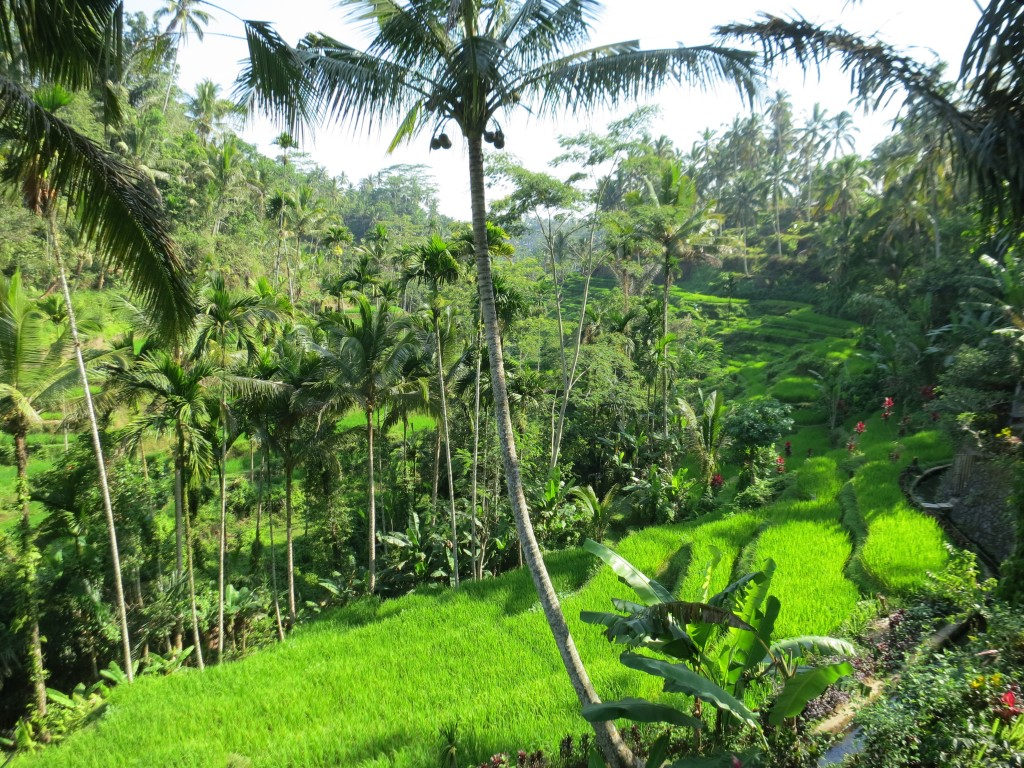 Luxury honeymoon in Bali, Indonesia - beautiful rice paddies