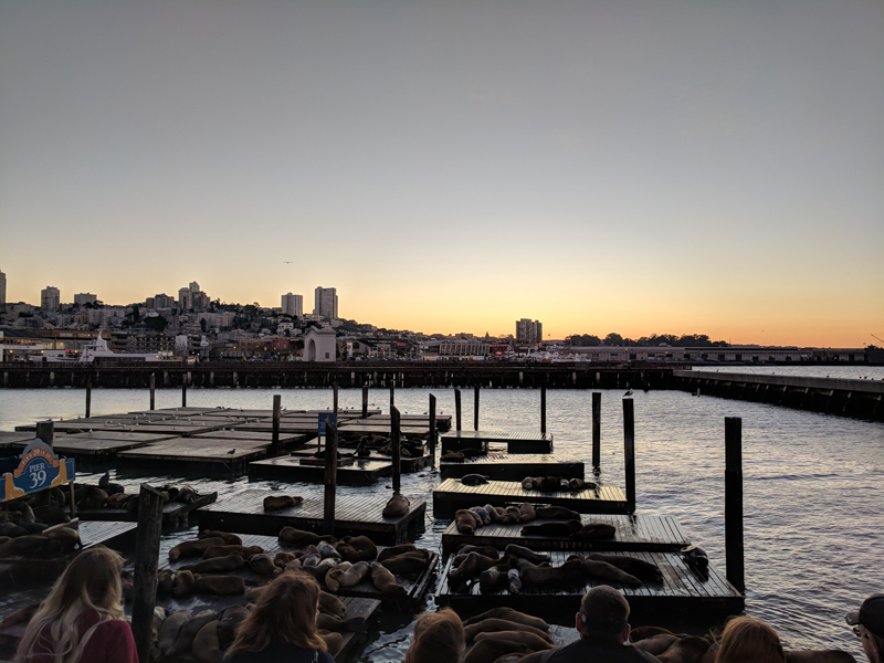 San Francisco urban getaway ideas - Sea lions at Pier 39