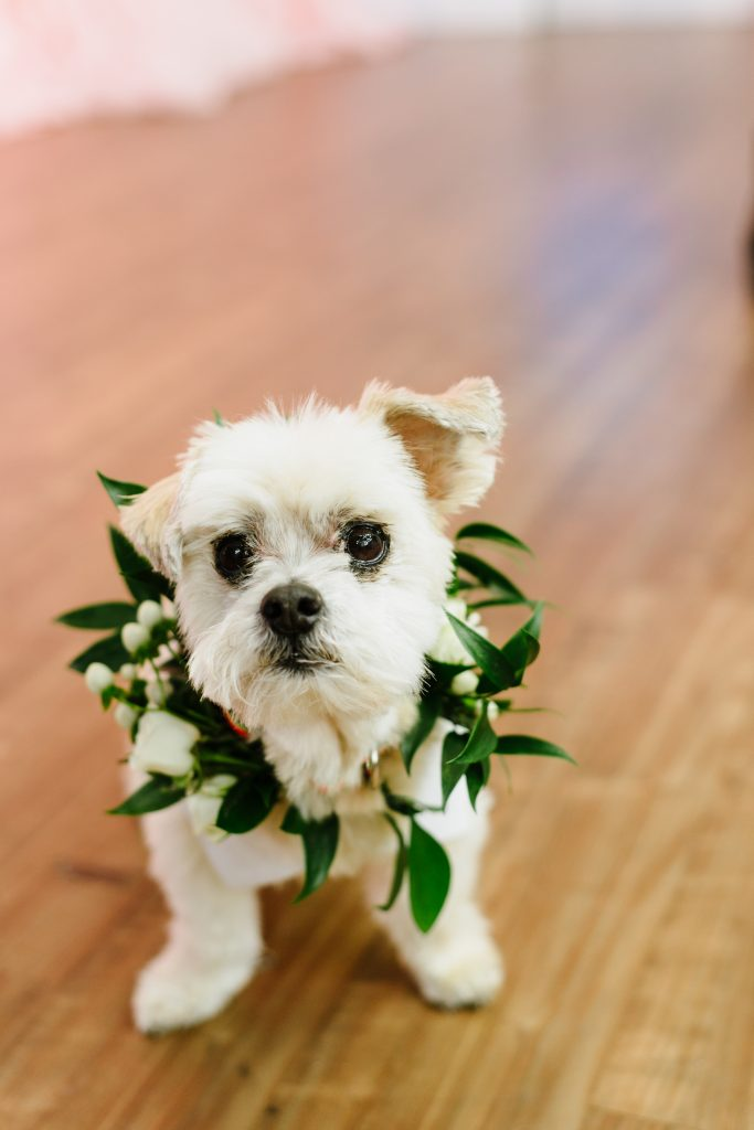 Wedding dog outfits - Hottest wedding trends right now from Breakfast Television Toronto, with wedding planner Rebecca Chan Weddings and Events